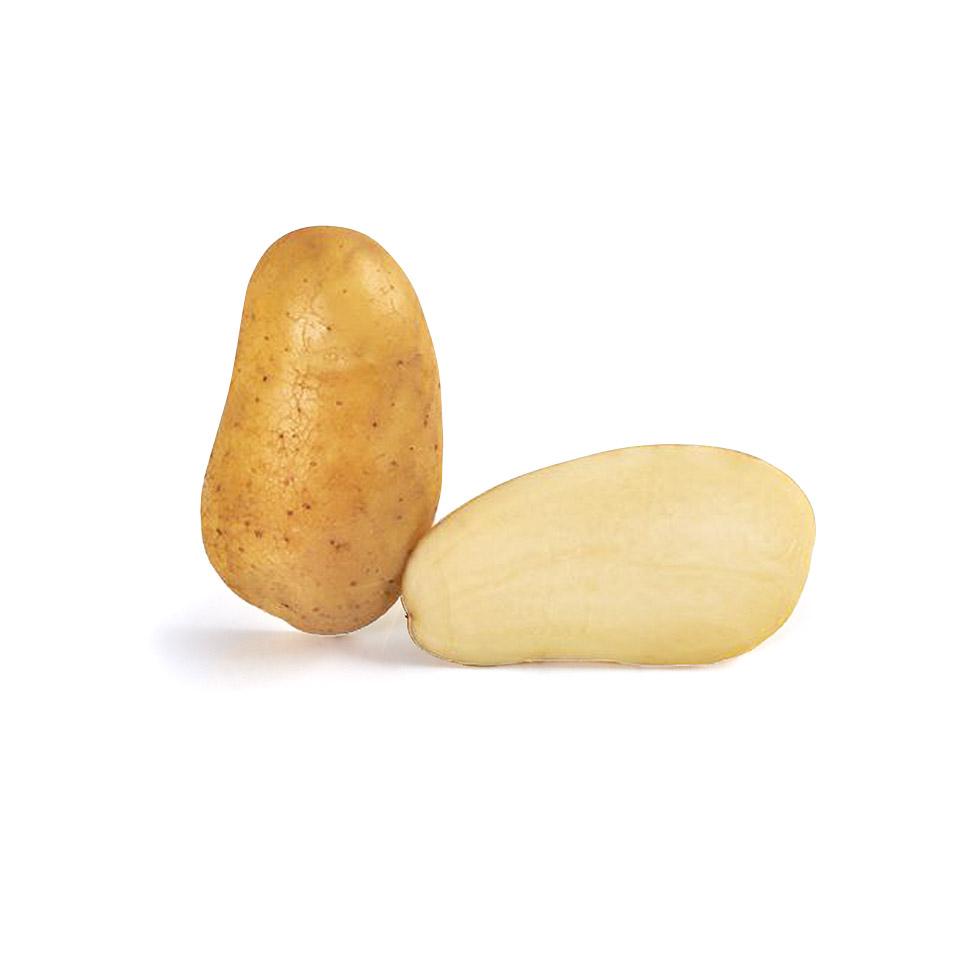 variété de pomme de terre Alaska