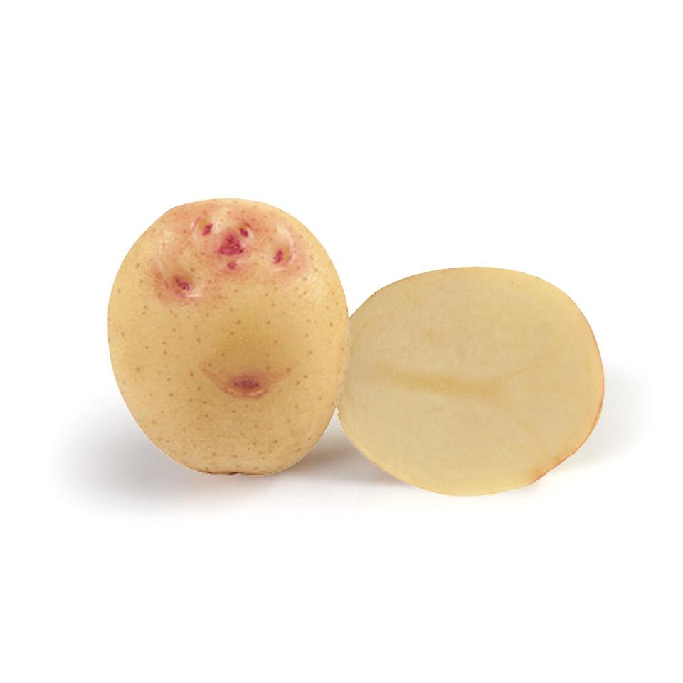 variété de pomme de terre Cara