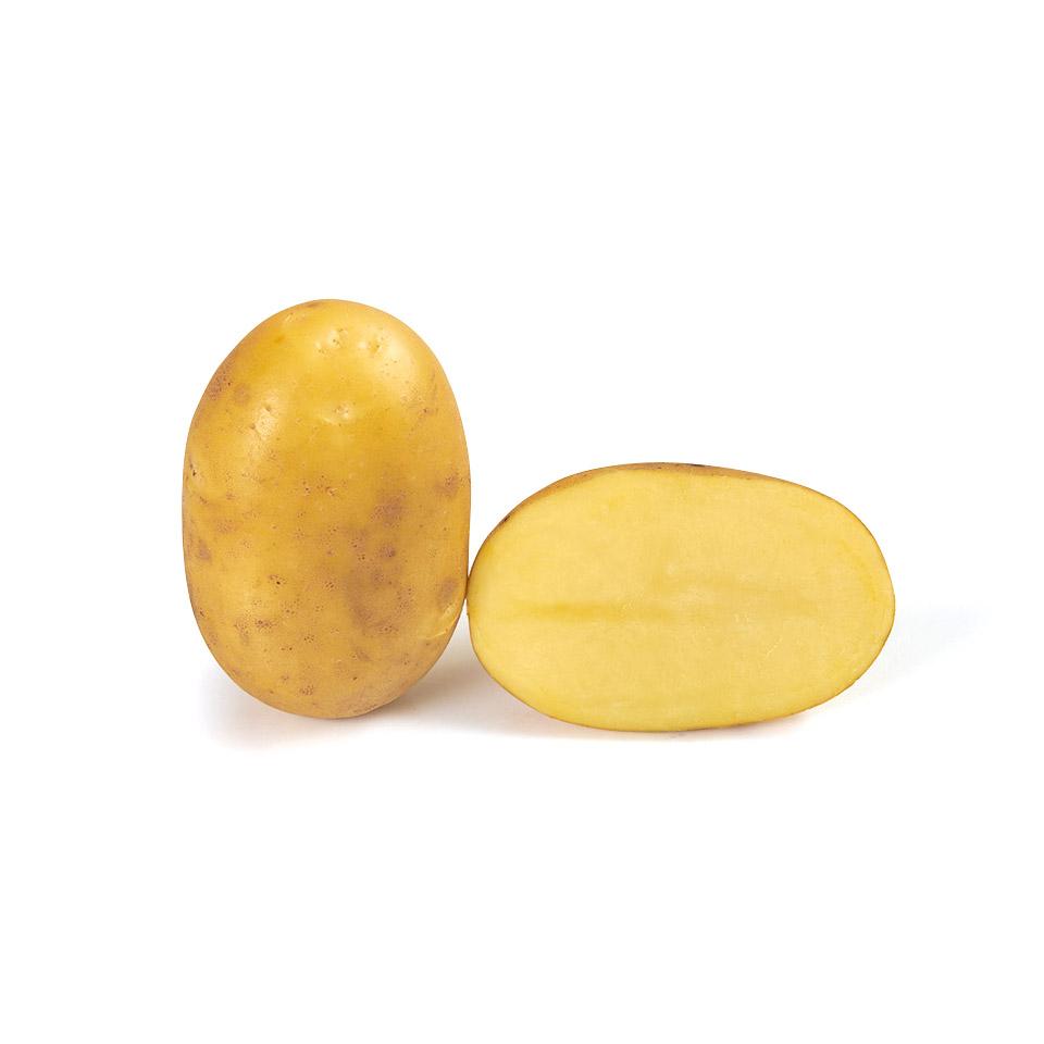variété de pomme de terre Mélène
