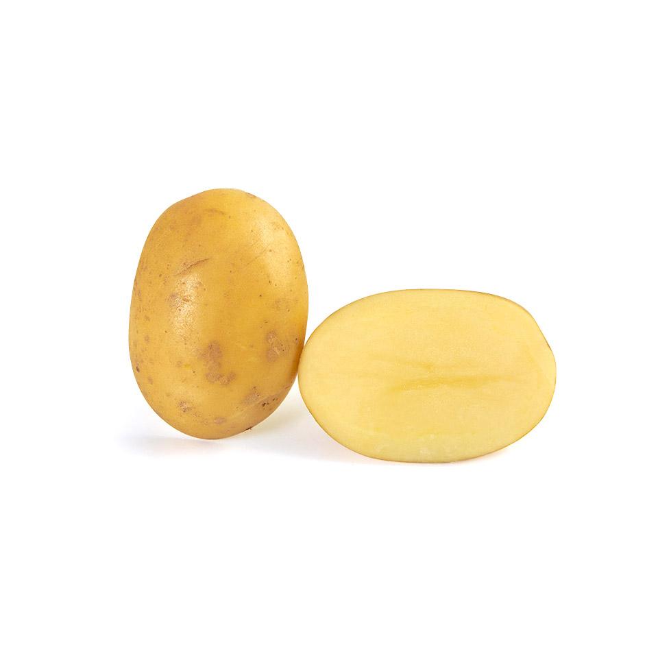 variété de pomme de terre Safrane