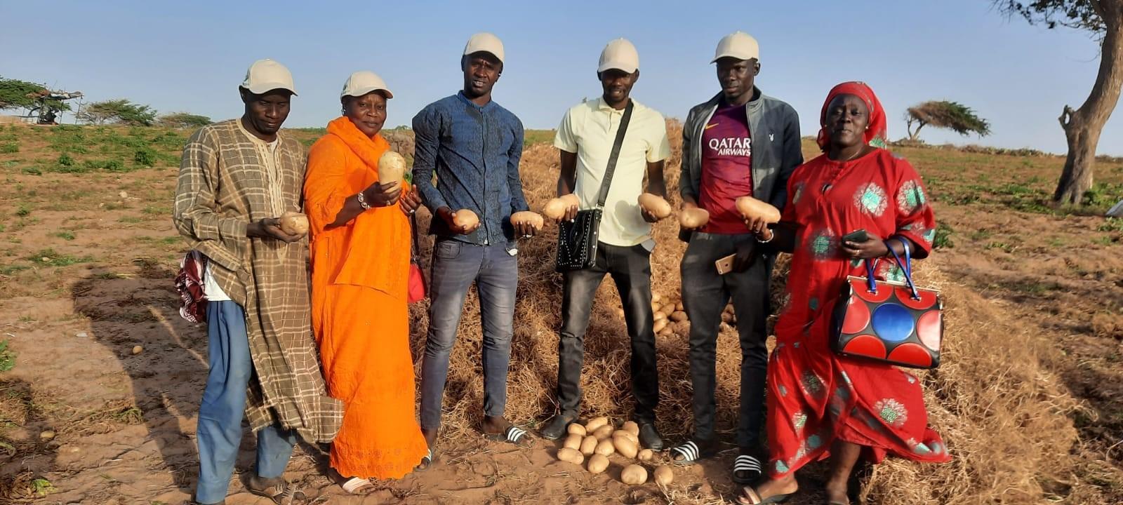 Pomme de terre NAIMA au Senegal_mars 2021